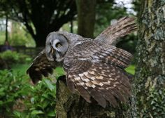 daily owls : Photo