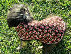 Reversible Quilted Dog Coat Toy Breed  by BloomingtailsDogDuds, $23.95