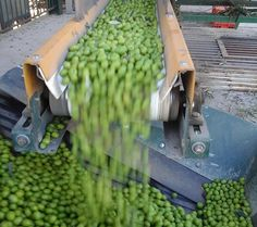 Olive Oil Production Waste Into Energy — Prototype System Up & Running In Granada
