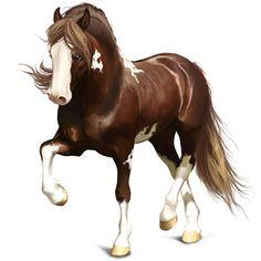 Castellano, Pferd Paint Horse Apfelschimmel mit Tobiano-Sche - Howrse