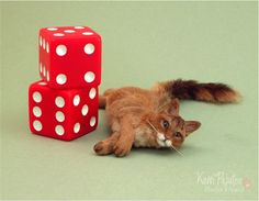 Because some of my friends here on DA have asked how I makea realistic miniature scalefurred cat... In October 2012, I was privileged to teacha live 18 hour class in Portlan...