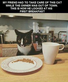 Catsitting.
