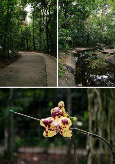 RECIFE- PE Jardim Botânico do Recife às margens da BR-232, km 7,5, no bairro do Curado De terça a sexta, das 08h30 às 15h30 Sábado e Domingo, das 9h às 15h30 Entrada Gratuita Telefones: (81) 3355.0002 e (81) 3355.0003