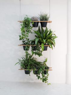 Living Small: A Hanging Window Box Planter - Gardenista Hanging Window Boxes, Window Shelf For Plants, Window Shelves, Window Planter Boxes, Plant Shelves, Diy Hanging, Hanging Planters, Hanging Shelves, Room With Plants