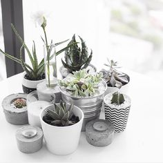 New Ideas For Plants Indoor Ideas Display Cactus Cacti And Succulents, Planting Succulents, Planting Flowers, Cactus Plante, Pot Plante, Suculentas Interior, Cactus E Suculentas, Decoration Plante, Plants Are Friends