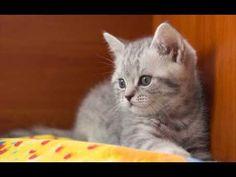 More Little Cute Kittens -TOP 10  Baby  Kittens : Video Compilation https://www.youtube.com/watch?v=uhF6Ppgl3JQ&list=PLC_HjotBFMpOKg467B6zh8MBee03skxkI