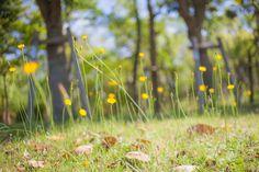 #flowers #flower #nature #beautiful #plants #blossom #flowerstagram #floral #florals #insta_pick_blossom #bloom #フラワー #花 #植物 #自然 #photographer #photographers #35mmf2 #osaka #japan #tumblr #tumblrgram #写真好きな人と繋がりたい #ファインダー越しの私の世界 #yellow #黄色 #キリトリセカイ