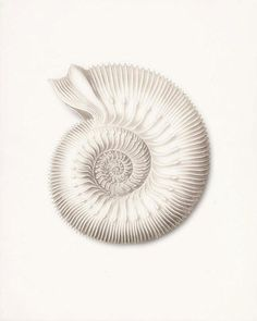 Items similar to Coastal Decor Ernst Haeckel Nautilus Sea Shell Giclee Art Print on Etsy Art And Illustration, Illustrations, Botanical Illustration, Ernst Haeckel, Coastal Style, Coastal Decor, Coastal Lighting, Coastal Chandelier, Modern Coastal
