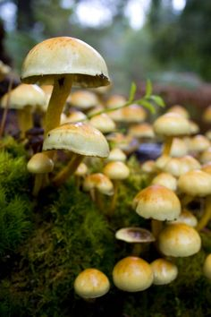 Mushrooms by Christian Hacker https://www.flickr.com/photos/gigiwallace/6171741326/