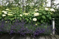 Jaren30woningen.nl   Hortensia en Lavendel: Mooie combi voor in een tuin bij een #jaren30 woning: