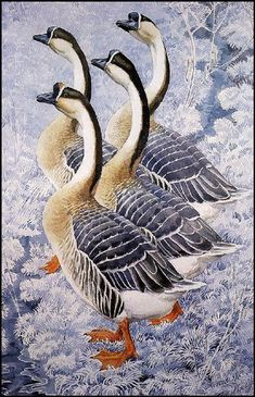 Chinese Geese by Charles Tunnicliffe. Naturalism. wildlife painting