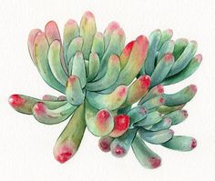 Succulent print of watercolour painting cactus botanical image 3 painting canvases cactus Succulent print of watercolour painting, cactus, botanical painting, green home decor art giclee print - square size Succulents Drawing, Watercolor Succulents, Watercolor Flowers, Succulents Painting, Cactus Watercolour, Succulents Art, Plant Painting, Watercolour Painting, Botanical Drawings