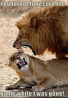 animal humor | Animal Humor lion funny