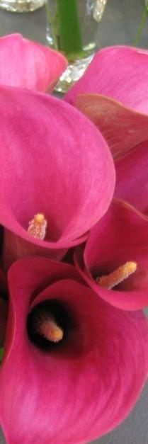 pink closeup.