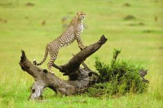 Images of the World - Wildlife and animals found in Africa.