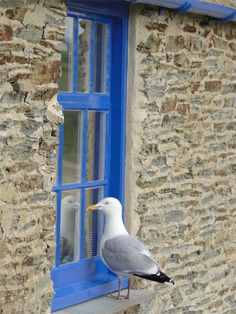 Seagull in Cornwall (Doc Martin?