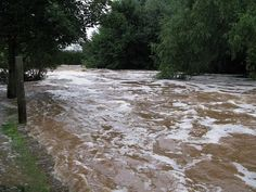 A new study suggests that severe storm events cause excessive amounts of organic matter to circumvent headwater systems, having profound effects on water quality.