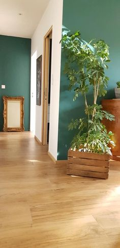 Decoration, Plants, Svelte Sage, Decor, Decorations, Plant, Decorating, Dekoration, Planets