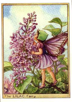 The Lilac Fairy from Flower Fairies of the Trees by Cicely Mary Barker