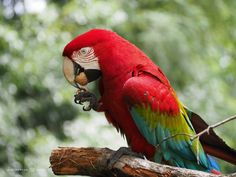 Papegaai in de Apenheul by Jacintha