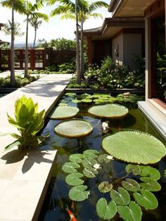 http://www.dropddesign.com/wp-content/uploads/2014/01/tropical-landscape-with-pond-deck-designs-and-lotus-also-Koi-fish.jpg