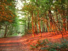 #Iserlohn #Sonnenuntergang #Natur #Wald #Sauerland #Stadtwald #nordrheinwestfalen #NRW