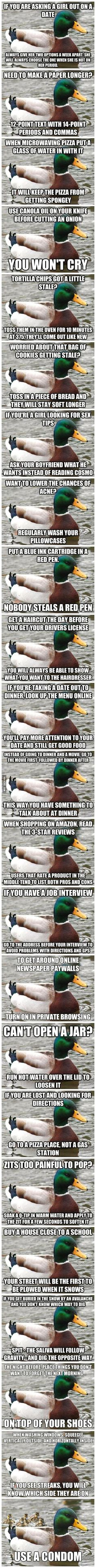 Bringing Actual Advice Mallard back to its roots - 9GAG