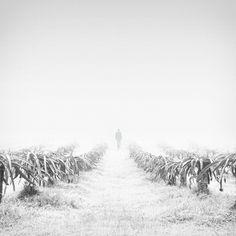 walking in fog