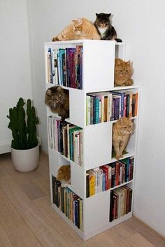Bookshelf styling idea for cat lovers: Leave a few bookshelf cubbies empty to give your feline friends a place to hang out.