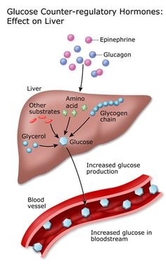how to control high glucose levels how to control high glucose levels Do you have problem With Blood Sugar ? Adults With Type 2 Diabetes Lower Blood Sugar Naturally, High Blood Sugar Levels, Types Of Diabetes, Cure Diabetes, High Glucose Levels, How To Control Sugar, Endocrine System, Fatty Liver, Diabetes Treatment