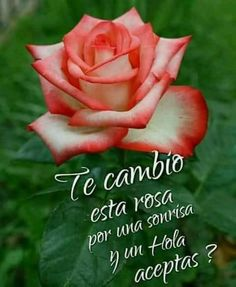 Check out what I made with Romantic Good Night Messages, Good Morning Messages, Love Messages, Good Morning Roses, Good Morning Funny, Morning Greetings Quotes, Morning Quotes, Spanish Inspirational Quotes, Spanish Greetings