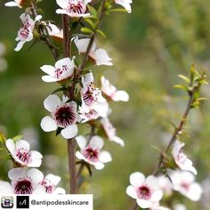 Wellbeing & Mindfulness Images (@wellness_images) • Instagram photos and videos Mindfulness, Wellness, Photo And Video, Videos, Photos, Image, Instagram, Pictures, Consciousness