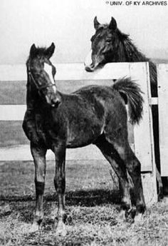 Man o' War as a foal with his dam Mahubah