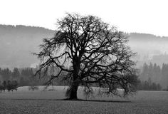Artist Sid Kincaid | The Old Tree Grows Stronger