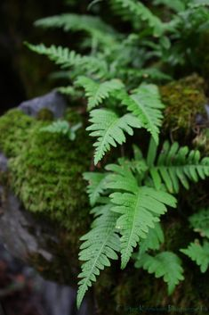 https://flic.kr/p/5YZ6vD | Crystal Creek Fern | Camera:  Canon EOS 40D Exposure: 0.02 sec (1/50) Aperture: f/3.2 Focal Length: 34 mm ISO Speed: 100