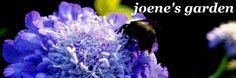 joene's garden: joene's garden