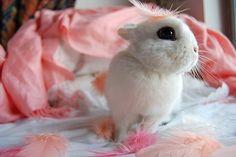Princess of Fluff