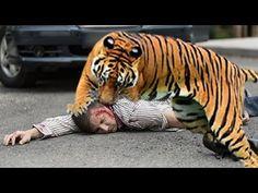 Khóc Thét Tiếng Mán Heo ,CHó Sói Khỉ , Sư Tử , Hổ , Báo đốm Đối Diện Con... Wild Animals, Film, Youtube, Movie, Film Stock, Cinema, Films, Youtubers, Wild Ones