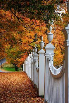 Autumn Fence, Woodstock,Vermont / Fall into Autumn