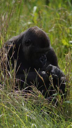 273 Best Primates Images On Pinterest