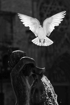 Black and White Dove (symbol of peace and Holy Spirit )