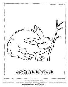 3 animals to color on pinterest coloring pages trout for Snowshoe hare coloring page