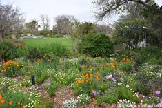 Late to the Garden Party: Local Spring Flower-fest