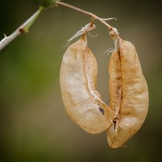 .: Pods :. by Jon Rista on 500px