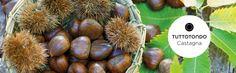 La castagna è nota per le sue straordinarie proprietà nutrienti: il marchio italiano #Tuttotondo ha creato una collezione di prodotti #corpo alla #Castagna www.tutto-tondo.com