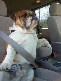 'I heard this new ride share service Schlep2P is all about safety.'