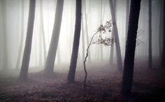Обои лес, туман, деревья, природа