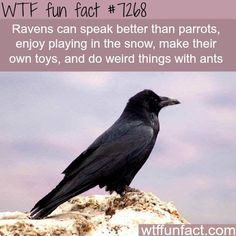 WTF Fun Facts is updated daily with interesting & funny random facts. We post about health, celebs/people, places, animals, history information and much more. New facts all day - every day! Wtf Fun Facts, Funny Facts, Random Facts, Cool Fun Facts, Weird Animal Facts, Interesting Facts About Animals, Weird Science Facts, Strange Facts, Fascinating Facts