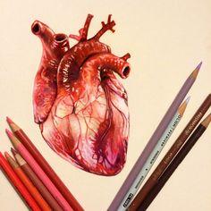 real heart illustration color - Buscar con Google