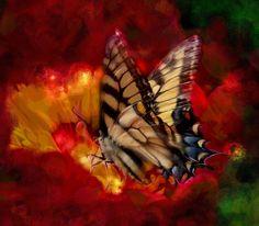 Koninginnenpage  Butterfly